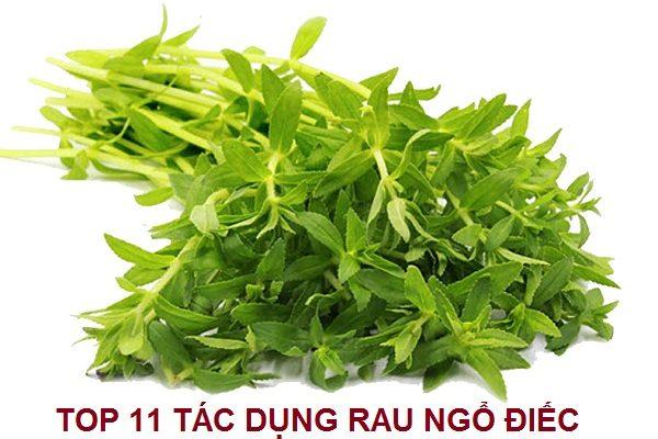 Top 11 Tác dụng chữa bệnh của cây Rau Ngổ Điếc
