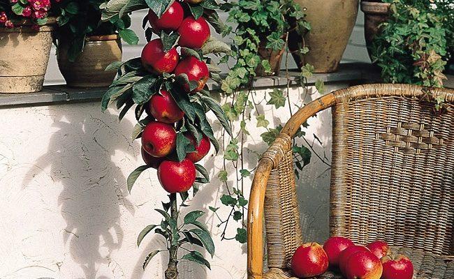8 loại cây ăn quả dễ trồng trên sân thượng chịu năng lượng tốt