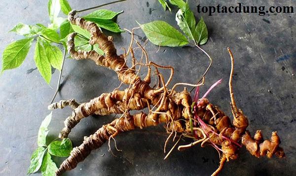 5 Loại cây dược liệu quý hiếm ở việt nam nên trồng mang lại hiệu quả kinh tế cao