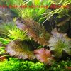 10 loại cây thủy sinh sống dưới nước dễ tìm ngoài tự nhiên