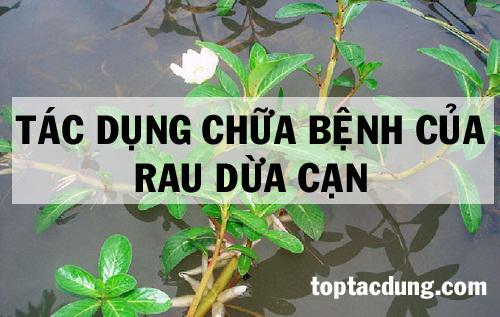 Top 10 Tác dụng chữa bệnh của cây Rau Dừa Cạn