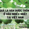 Quả La Hán Được Trồng Ở Đâu Nhiều Nhất Tại Việt Nam