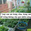 7 loại rau ưa bóng râm, bóng mát dễ trồng không cần quá nhiều nắng