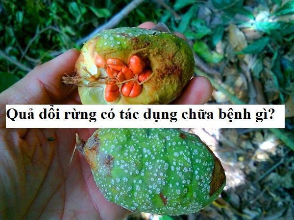 qua-doi-rung