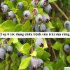 Top 6 tác dụng chữa bệnh của trái sim rừng