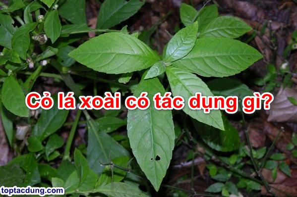 tac-dung-co-la-xoai