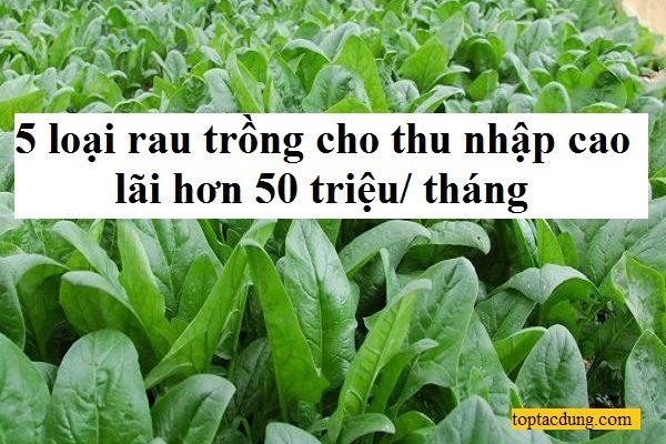 5 loại rau trồng cho thu nhập cao, lãi hơn 50 triệu/ tháng
