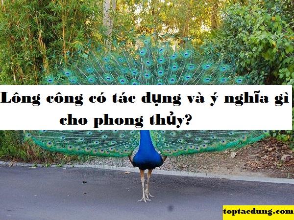 long-cong